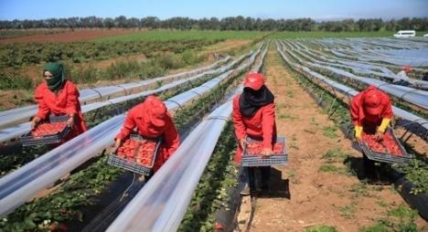 """عاملات لفراولة المعاودات سيحصلن على الإقامة في إسبانيا بعد أربع سنوات وهذه إجراءات """"يتيم"""" لمواكبة هجرتهن"""