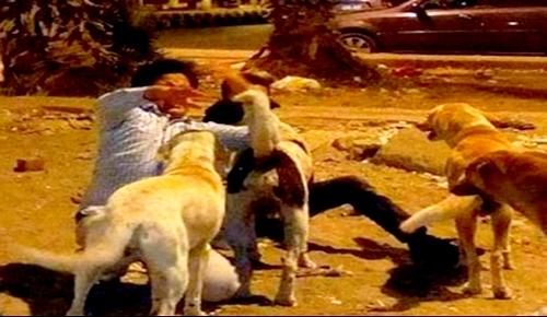الدريوش.. مواطنون يخلّصون طفلا مـن كلب ضال وتذمر من انتشارها بشوارع المدينة