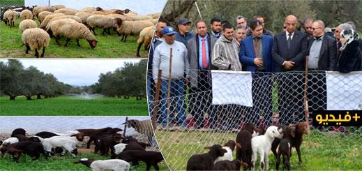 عامل إقليم الدريوش يتفقد مشروع تعاونية امطالسة لتربية وتسويق الأغنام بمنطقة بوفرقوش
