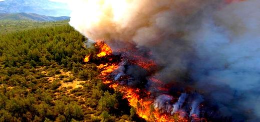 الحرائق تكبد إقليم الحسيمة خسارة 38 هكتارا من الغطاء الغابوي
