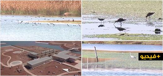 شاهدوا.. أشغال تهيئة منتزه الطيور ببحيرة مارتشيكا تصل مراحلها  الأخيرة