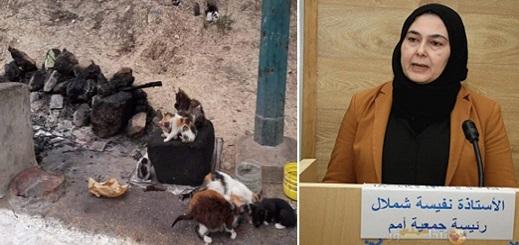 الناظورية شملال تستنكر إحراق 40 قطا بآسفي وتطالب بتشريعٍ حمائي وقانوني يُجرّم المساس بحياة الحيوان بالمغرب