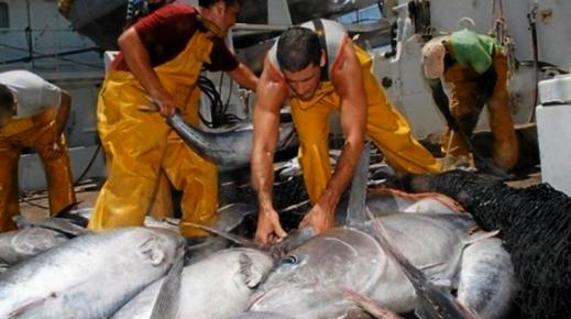 انطلاق عملية صيد سمك التون الأحمر بسواحل إقليمي الحسيمة والدريوش