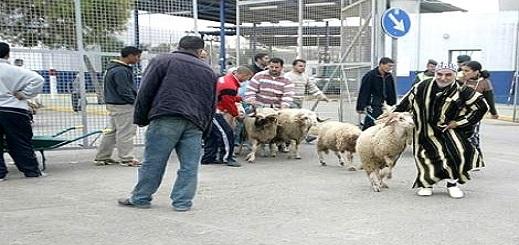 عشرات العائلات بمليلية تلجأ يوم العيد إلى الناظور بعد منع استيراد الأكباش المغربية