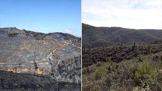 نشطاء يطلقون حملة على مواقع التواصل الإجتماعي لإعادة تشجير غابة إفرني المحترقة
