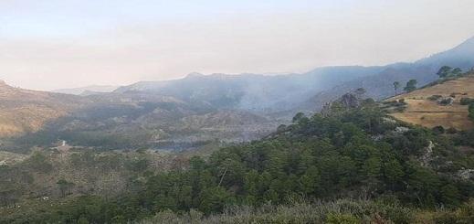 حريق يتلف 65 هكتارا من غابة عشاشة تاسيفت بين شفشاون والحسيمة