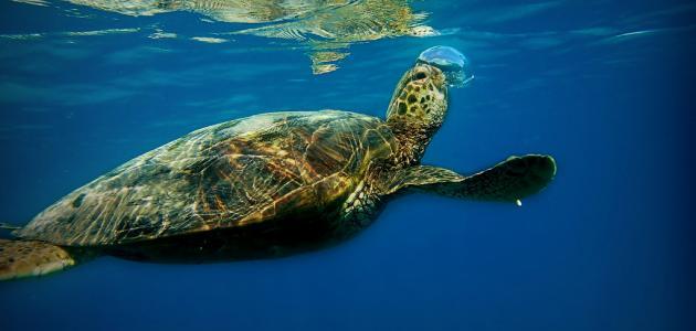 الحكومة تصدر قانونا جديدا يمنع صيد الثدييات والسلاحف البحرية بالمياه المغربية