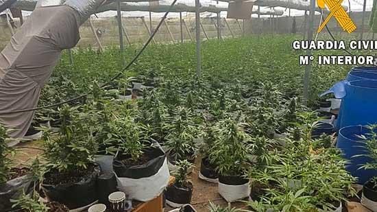 بالصور.. إكتشاف عدة مزارع بضواحي إشبيلية تنتج مخدر الماريغوانا