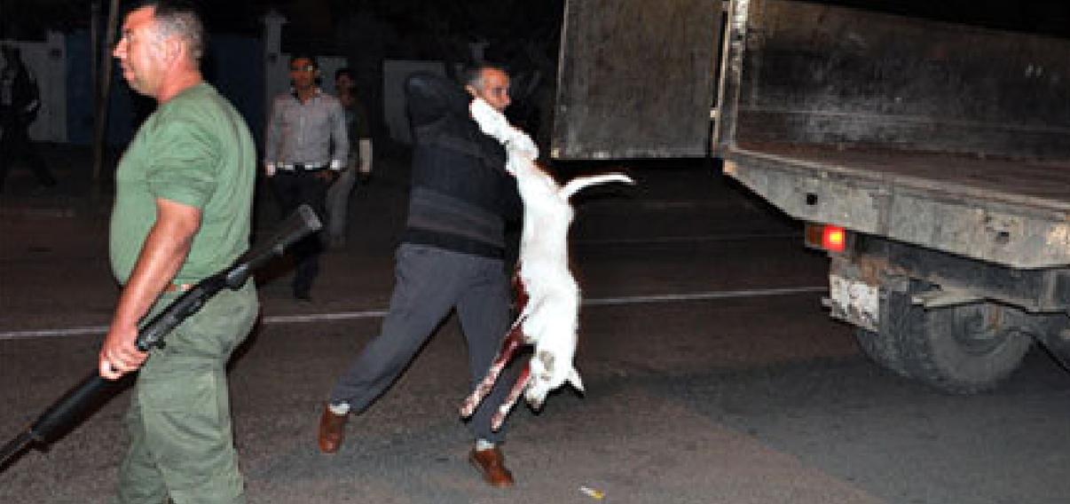 السلطة المحلية بسلوان تشن حملة لإعدام الكلاب الضالة باستعمال الرصاص