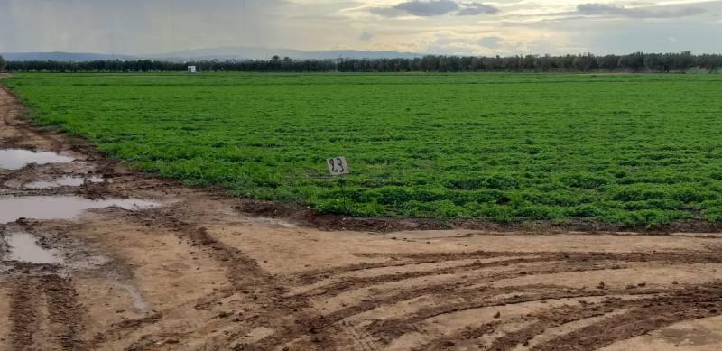 مديرية الفلاحة تحصي الآثار الايجابية للتساقطات المطرية الأخيرة بالمنطقة