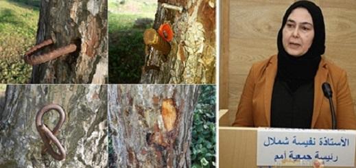 """جمعية """"أمم لحماية البيئة"""" تُحمّل مسؤولية إعدام """"غابة الصنوبر"""" لهذه الجهات المعنية بالناظور"""