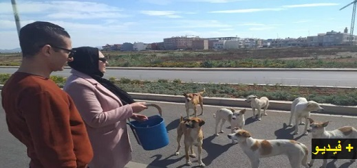 """في عز """"حالة الطوارئ"""".. سيدة تطعم القطط والكلاب الضالة وسط الناظور وهذه رسالتها الغاضبة"""