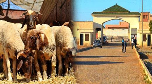 """السلطات تعيد فتح سوق """"الماشية"""" ببني وكيل أولاد محند في وجه التجار"""