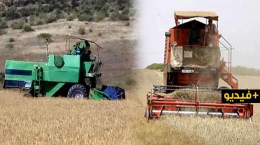 روبورتاج.. انطلاق موسم الحصاد بعدد من المناطق الفلاحية بإقليم الدريوش