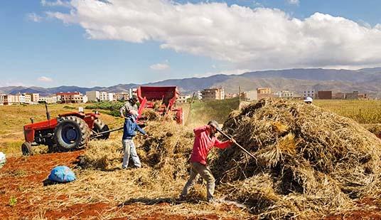 بالصور..  إنطلاق موسم الحصاد بتمسمان وسط الحديث عن تذبذب في محصول هذه السنة