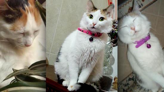 سيدة تبحث عن قطتها التي إختفت بحي لعري الشيخ بالناظور