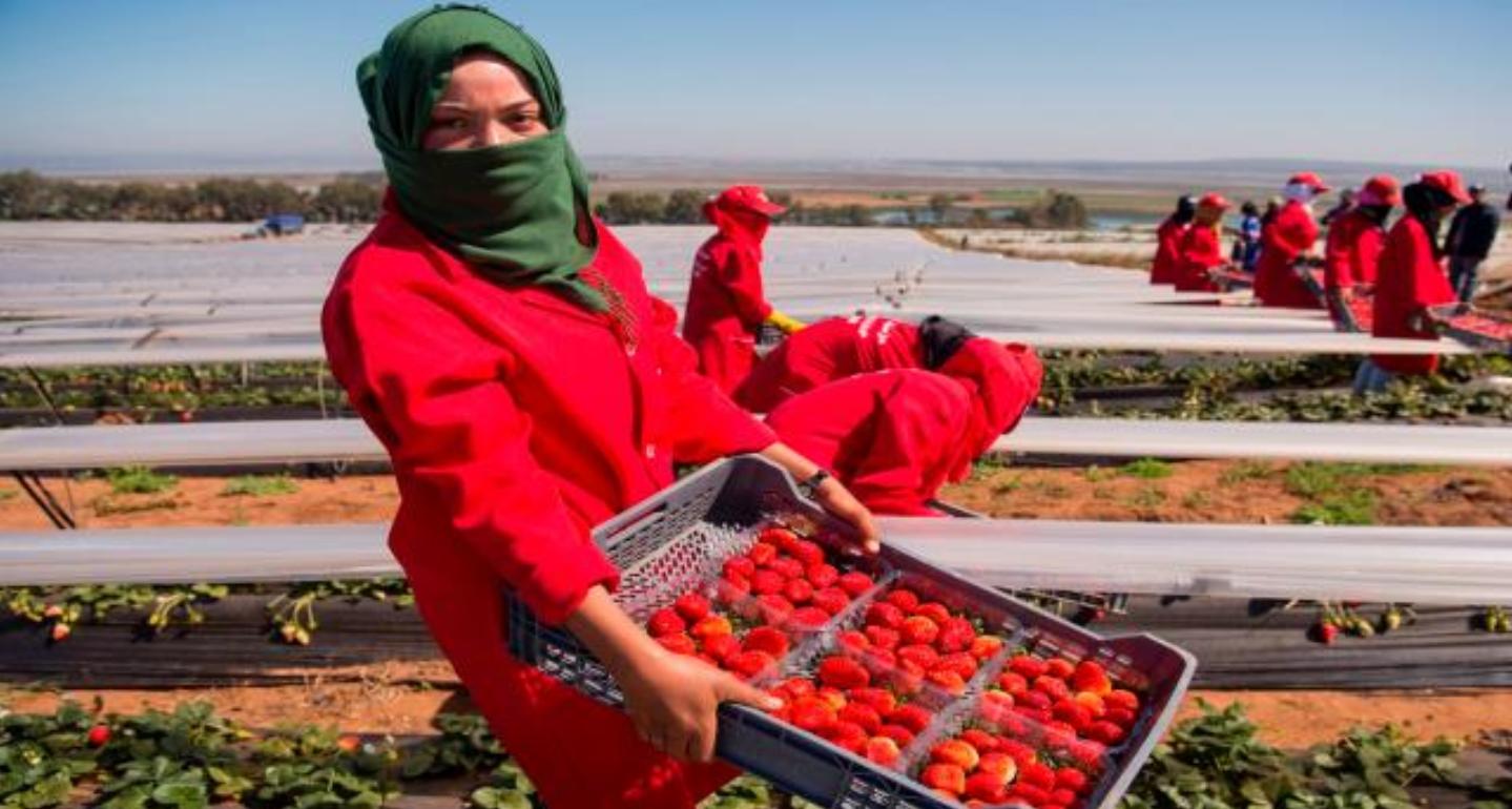 الخارجية تعلن عن موعد إعادة عاملات الفراولة  اللواتي يشتغلن بهويلفا
