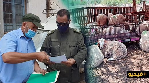 """السلطات العمومية تراقب رُخص """"أكشاك"""" بيع أضاحي العيد بالناظور وتطالب التجار بالإلتزام بالتدابير الوقائية"""