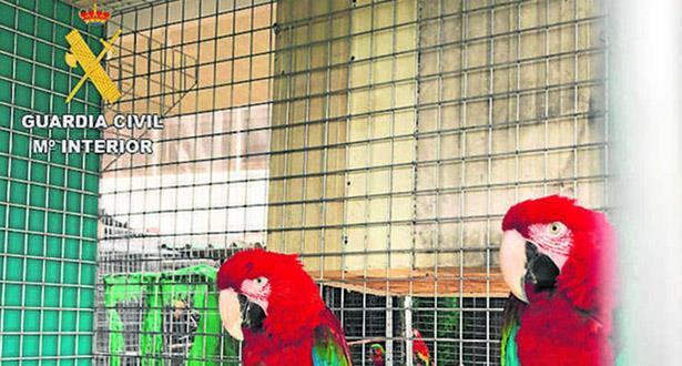 بتنسيق مع الدّرك الملكي المغربي.. الحرس الإسباني يفكّك شبكة لتهريب الطيور المحمية