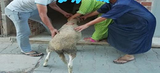جمعية عين عمار المتحدة توزع أضحية العيد