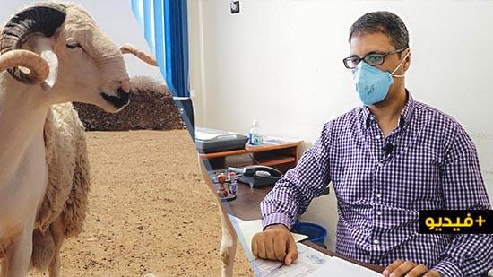 الدكتور العشاش يقدم نصائح مهمة حول الطريقة الصحيحة لذبح الأضحية وتخزين اللحم