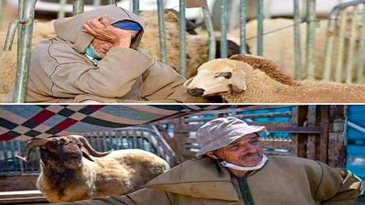 """تعاطف واسع مع صور حزينة لـ""""كسّابة"""" لم يبيعوا مواشيهم تعكس مرارتهم وخيبة أملهم"""