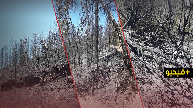 """شاهدوا.. مخلفات حريق """"أكمسان"""": نفوق أعداد كبيرة من الوحيش وفقدان مساحات شاسعة من الغطاء الغابوي"""