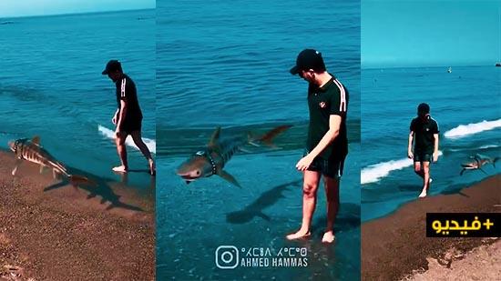 في خدعة سينمائية جديدة أحمد حماس يتجول رفقة سمكة قرش بأحد شواطئ الناظور