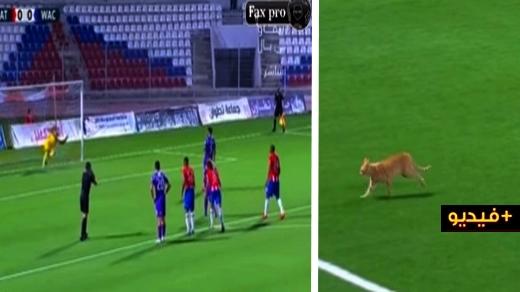 شاهدوا.. دخول قط لأرضية الملعب يمنع تنفيذ ضربة جزاء في مباراة المغرب التطواني والوداد