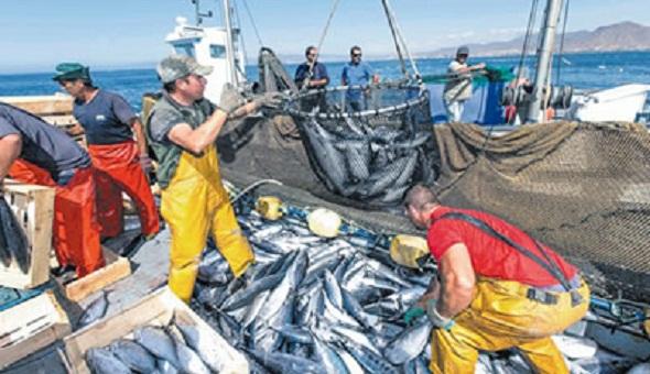 أرجعه صيادون بالحسيمة إلى الهجمات المتكررة للدولفين الأسود.. تراجُع مردودية الصيد البحري في السّاحل المتوسطي للمغرب