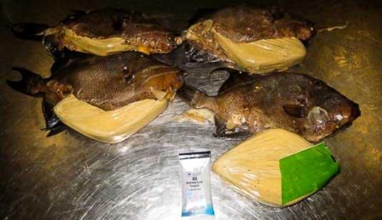 """""""تنسيق يين الجمارك والأمن يحبط محاولة لتهريب كمية من الأسماك محشوة بـ""""الحشيش"""