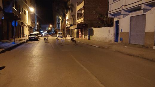 الكلاب الضالة تغزو شوارع الناظور مجددا والمجلس البلدي خارج التغطية