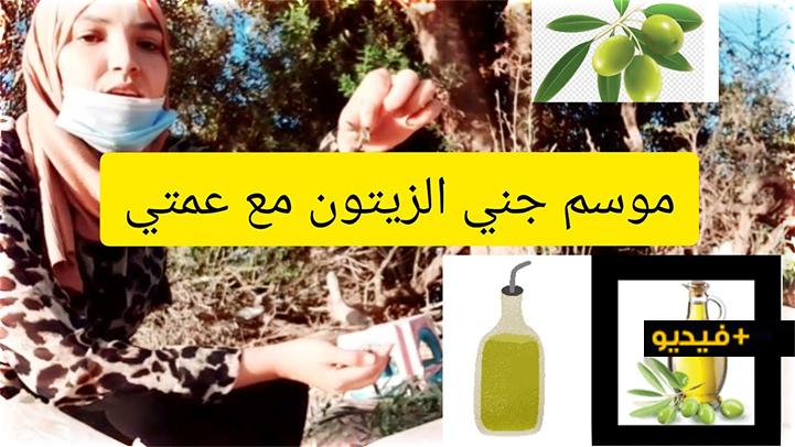 شاهدوا.. مراحل استخراج زيت الزيتون مع شرح مستفيض من مالك مطحنة للعصر