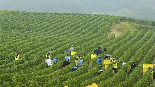 فرنسا تستعد لجلب 300 عامل موسمي من  المغرب لإنقاذ موسمها الفلاحي