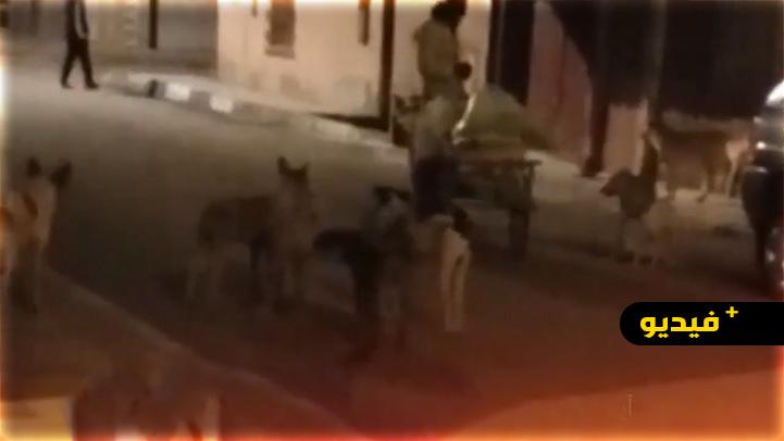 شاهدوا.. مواطنون ينقذون شخصا من الموت بعد هجوم كلاب ضالة عليه ببني انصار