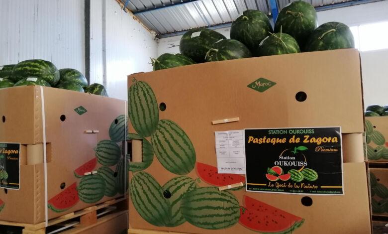 دراسة إسبانية: 81٪ من البطيخ المستورد قادم من المغرب