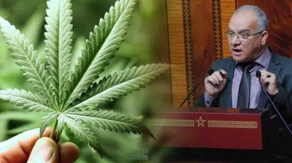 شاهدوا.. برلماني يدافع عن الكيف ويدعو المغاربة لاستهلاكه للحد من الجرائم