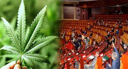 بسبب حزب العدالة والتنمية.. البرلمان يؤجل دراسة مشروع قانون تقنين الكيف