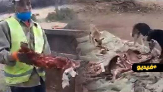 صادم.. العثور على بقايا أطراف بغال وحمير يُشتبه استعمالها في إعداد وجبات سريعة