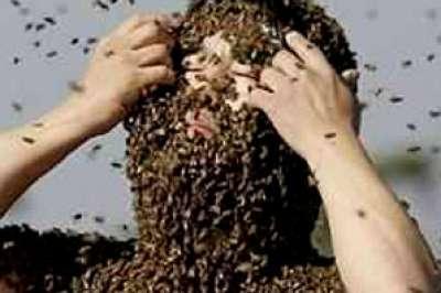 أسراب من النحل تنهي حياة مهاجر عاد لتوه إلى المغرب