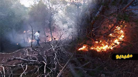 حريق بالغابة المحيطة بمقبرة سيدي سالم يأتي على مساحة هامة من الغطاء النباتي