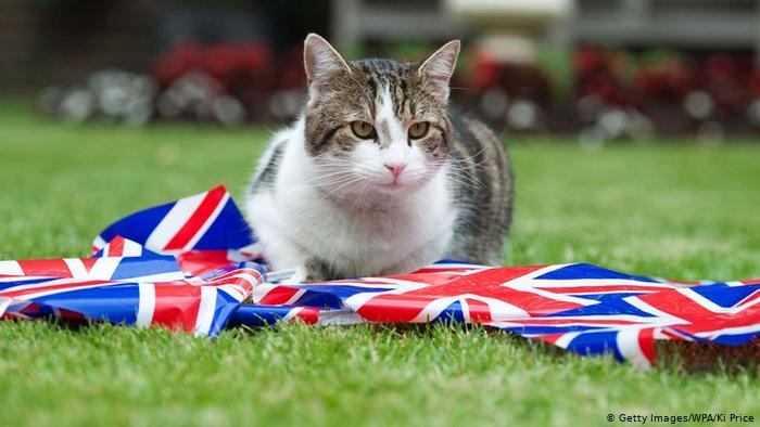 إدانة مواطن بريطاني بالسجن النافذ بعد ذبحه لـ 9 قطط