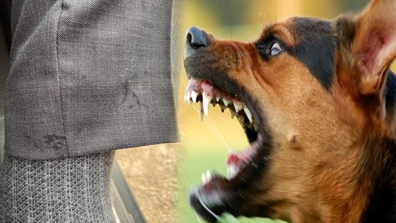 الاستنكار يرافق انتشار الكلاب الضالة في حي المطار بالناظور