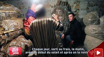 شوهة.. قناة فرنسية تنشر تحقيقا على الحشيش بمنطقة الريف وتكشف عن الرشوة في مملكة الكيف