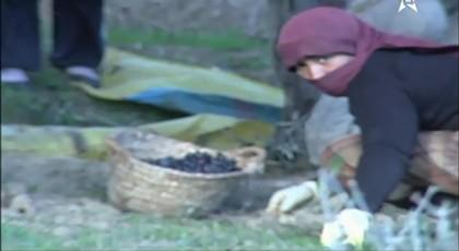 منطقة تافرسيت و زراعة الزيتون
