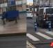 حقيبة مشبوهة متروكة وسط الشارع العام ترعب ساكنة مدينة مليلية و تستنفر السلطات الأمنية