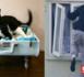 نشال يستعمل قطا بطريقة ذكية في عمليات سرقة حيرت ساكنة الناظور وكبدتهم خسائر كبيرة في أغراضهم