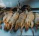 التفشي المهول للقنص العشوائي يهدد الثروة الحيوانية بأركمان والداخلية مطالبة بوقف النزيف