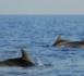 """صور حصرية.. عودة """"النيكرو"""" إلى خليج الحسيمة يهَجّرُ ممتهني الصيد بالمراكب التقليدية"""