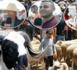 روبورطاج: إقبال كبير على سوق المواشي بسلوان وتضارب الأراء حول أثمنة الأضاحي